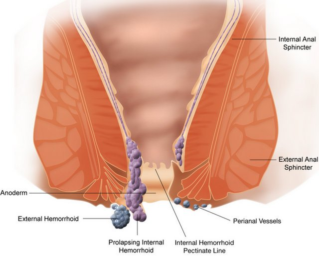 Linea pectinea